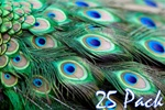"40"" Peacock Feathers (Pack of 25)"