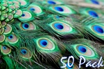 "40"" Peacock Feathers (Pack of 50)"