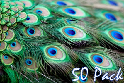 40 Quot Peacock Feathers Pack Of 50