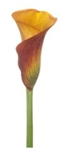 Orange Mango Mini Calla Lily - 60 Stems
