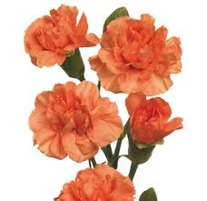 Orange - Mini Carnations - 160 stems