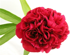 Red Peony Flower - 50 Stems