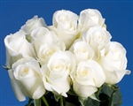 "Blizzard White Rose 20"" Long - 100 Stems"