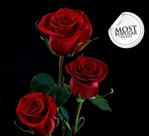"Forever Young Red Rose 20"" Long - 100 Stems"