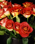 "Leonidas Novelty Rose 20"" Long - 100 Stems"