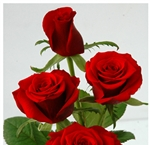 "Rouge Baiser Red Rose 20"" Long - 100 Stems"