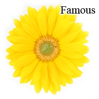 Famous Yellow Gerbera Daisies - 72 Stems *VERY POPULAR*