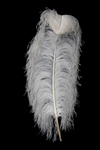 "19-24"" Ostrich Feathers - White (Pack of 12)"