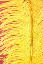 "16-18"" Ostrich Feathers - Yellow (Pack of 12)"
