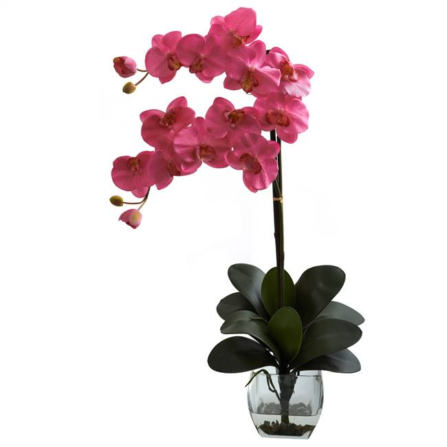 Double Phal Orchid w/Vase Arrangement