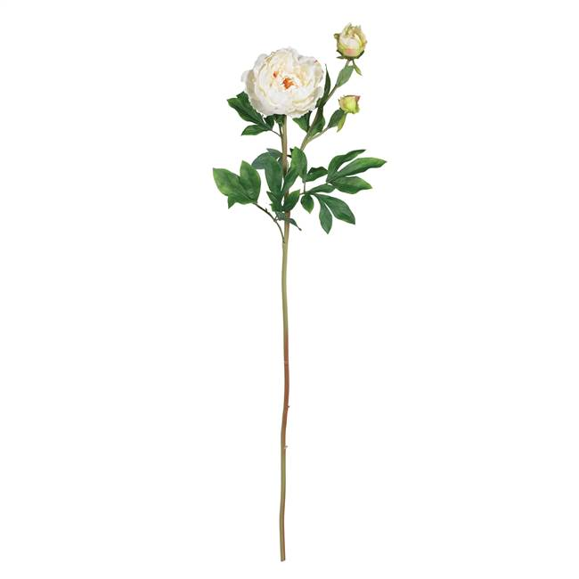"38.5"" Peony w/Leaves Stem (Set of 12)"
