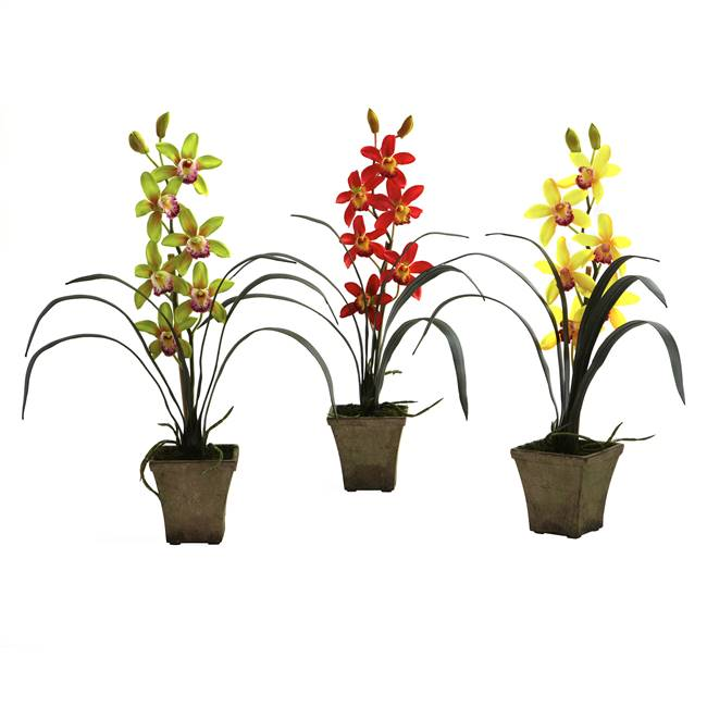 Cymbidium Orchid w/Vase (Set of 3)