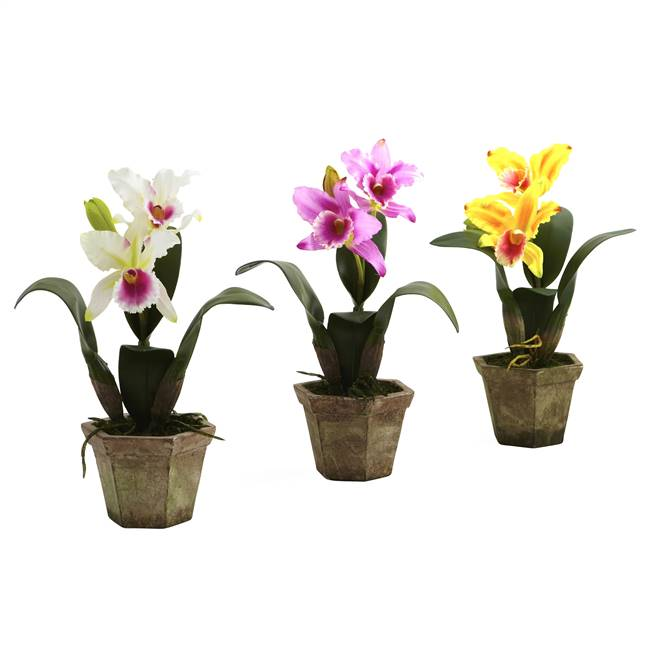 Cattelya Orchid w/Vase (Set of 3)