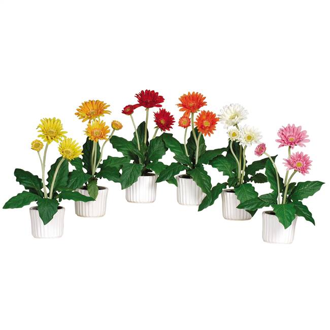 Gerber Daisy w/White Vase (Set of 6)