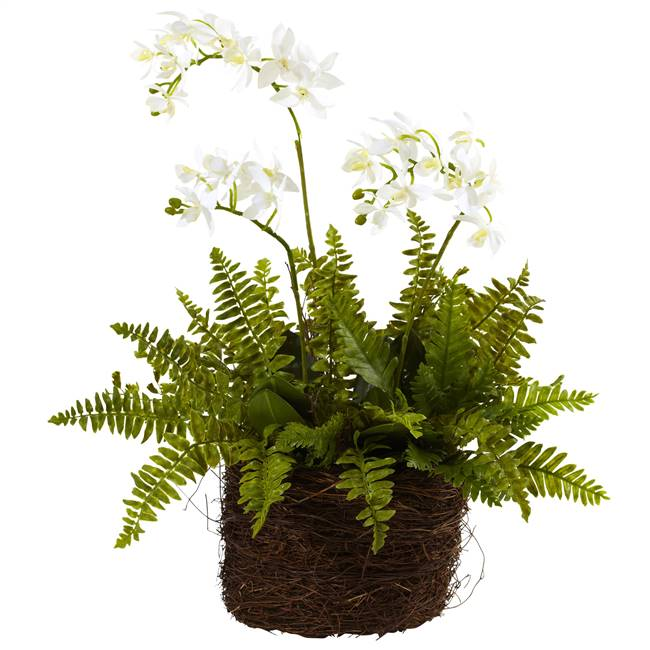 Mini Phalaenopsis & Fern w/Bridsnest Planter