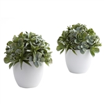 Mixed Succulent w/White Planter (Set of 2)