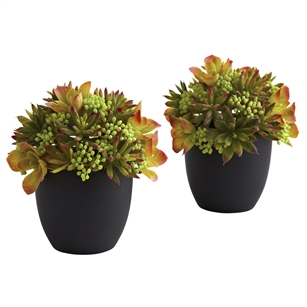 Mixed Succulent w/Black Planter (Set of 2)
