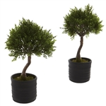 Cedar Bonsai w/Planter (Set of 2)