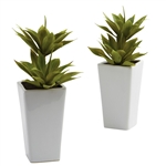 Double Mini Agave w/Planter (Set of 2)