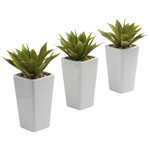 Mini Agave w/ Planter (Set of 3) White