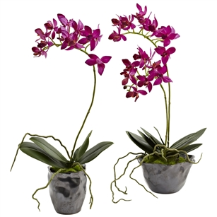 Mini Phal w/Metallic Vase (Set of 2)