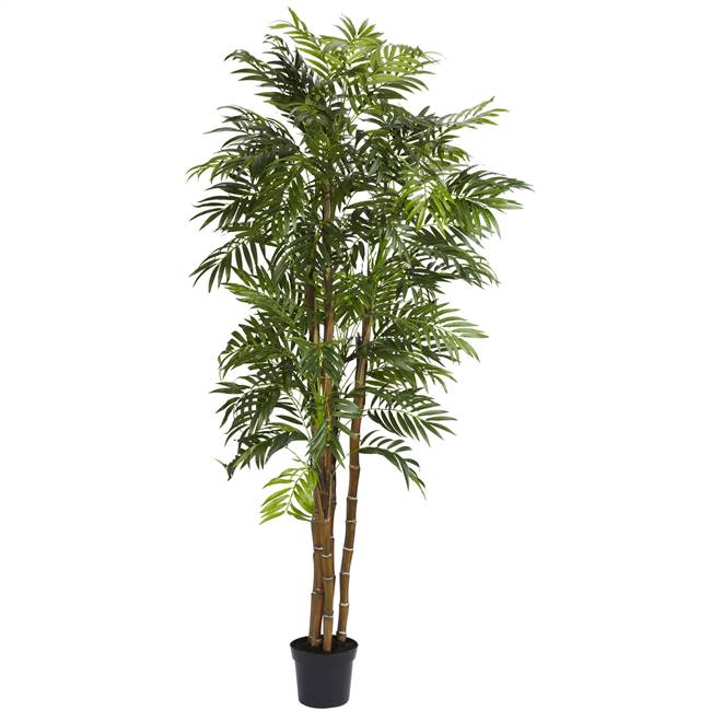 6' Bella Palm Silk Tree