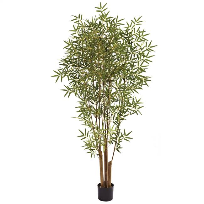 6' Japanese Bamboo Tree