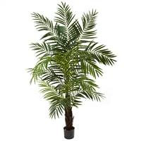 6' Areca Palm Tree