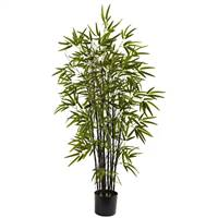 4' Black Bamboo Tree