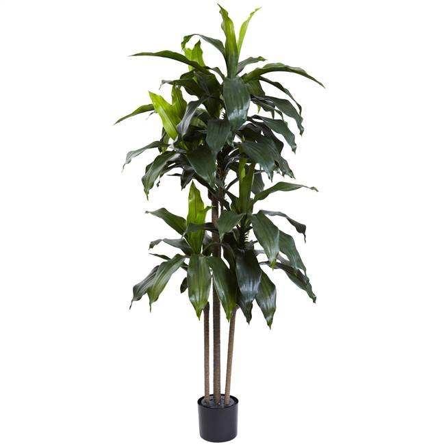 5' Dracaena Plant UV Resistant (Indoor/Outdoor)