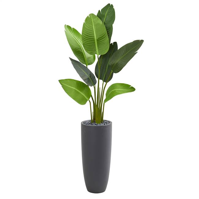 5.5' Traveler's Palm Artificial Tree in Gray Planter