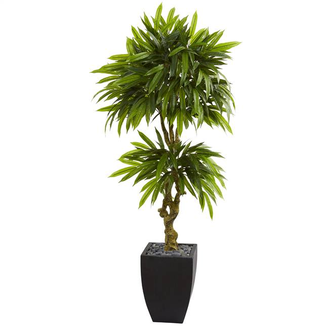 5.5' Mango Artificial Tree in Black Wash Planter UV Resistant (Indoor/Outdoor)