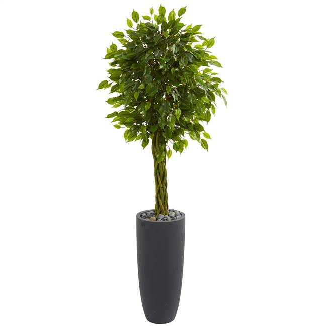 5.5' Braided Ficus Artificial Tree in Gray Cylinder Planter UV Resistant (Indoor/Outdoor)