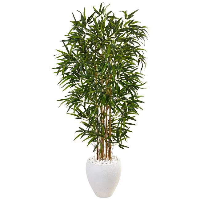5' Bamboo Tree in Oval White Planter