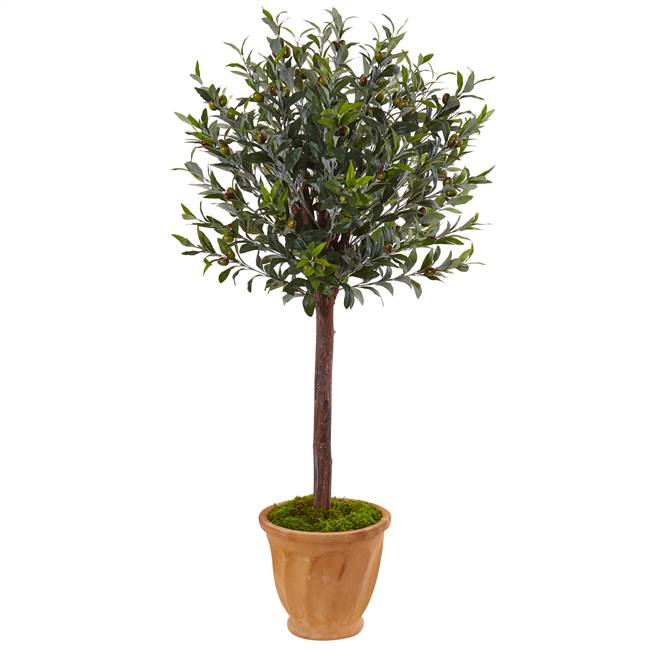 4.5' Olive Tree in Terracotta Planter