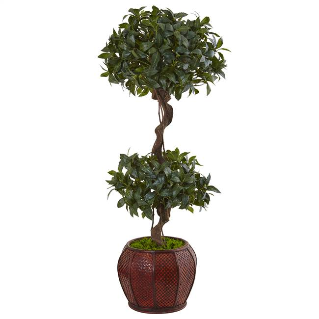 4.5' Sweet Bay Double Topiary Tree in Round Wood Planter