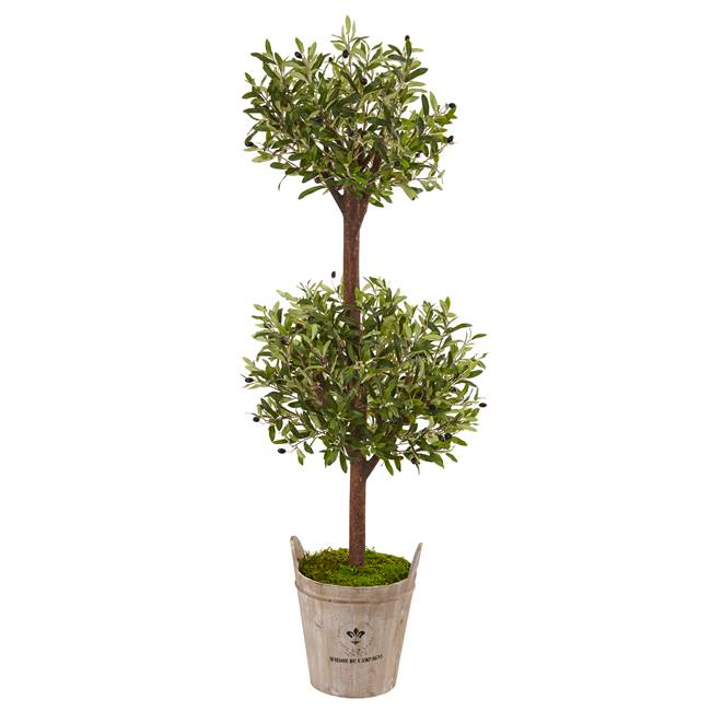 5' Olive Tree in Farmhouse Planter