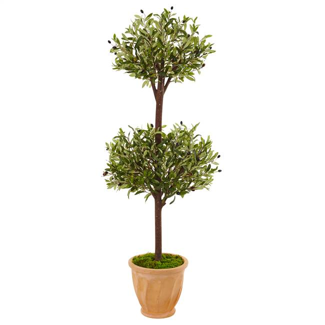 4.5' Olive Topiary Tree in Terracotta Pot