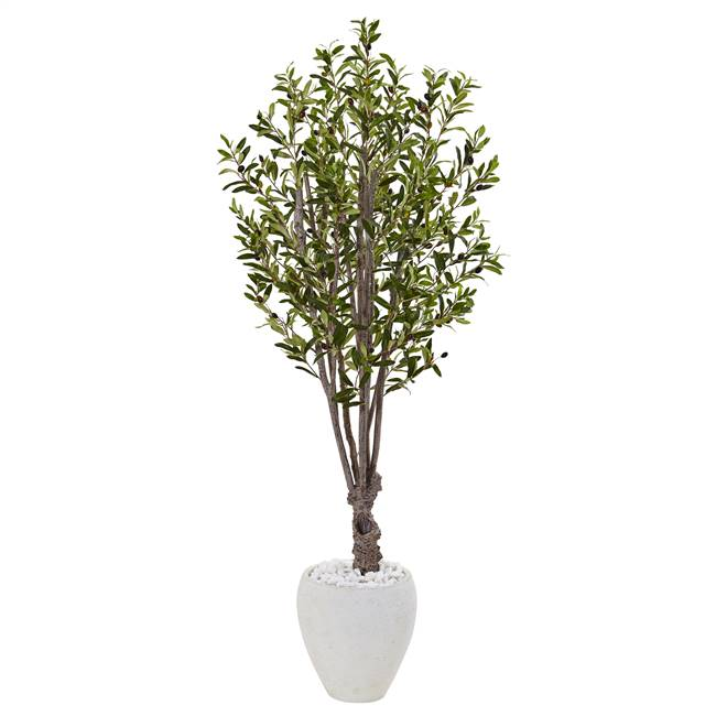 5' Olive Tree in White Oval Planter