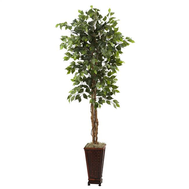 6.5' Ficus w/Decorative Planter