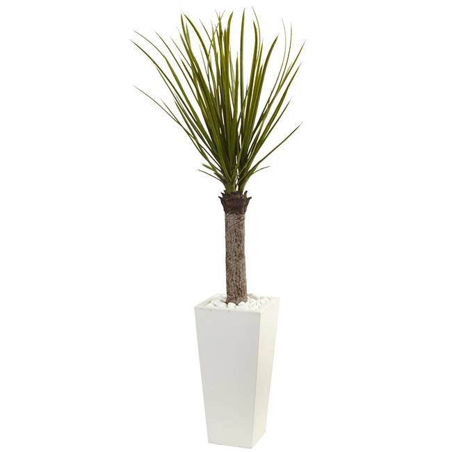 4' Yucca Tree in White Tower Planter