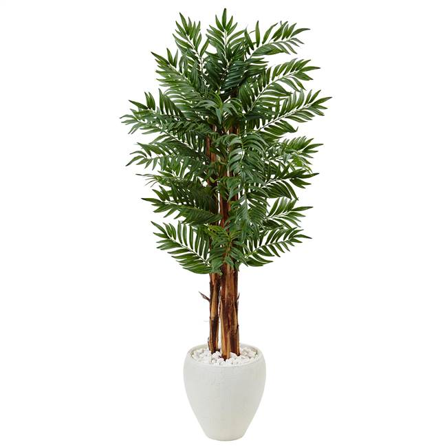 5' Parlor Palm Tree in White Oval Planter
