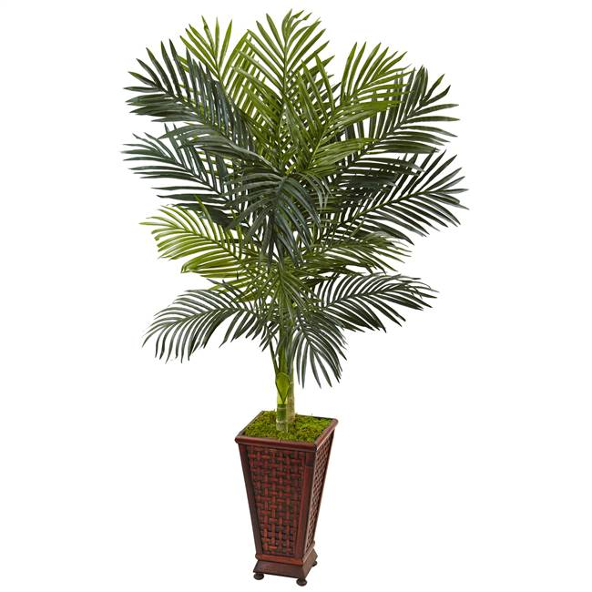 5' Golden Cane Palm Tree in Decorative Planter