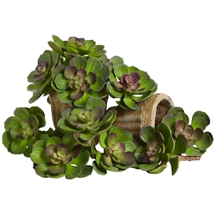 "5"" Echeveria Succulent Plant (Set of 12)"