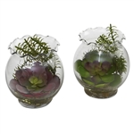 Succulent w/Fluted Vase (Set of 2)