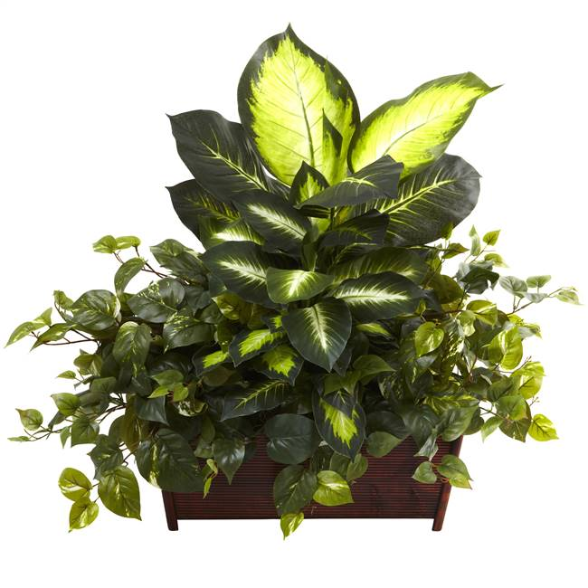 Golden Dieffenbachia, Philo & Pothos w/Wood Planter