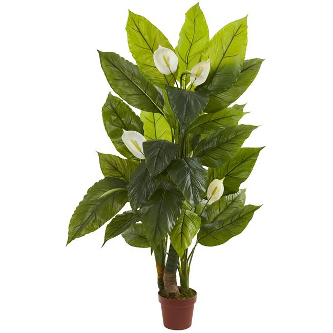 4.5' Spathyfillum Plant (Real Touch)