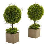 Boxwood Topiary w/Planter (Set of 2)