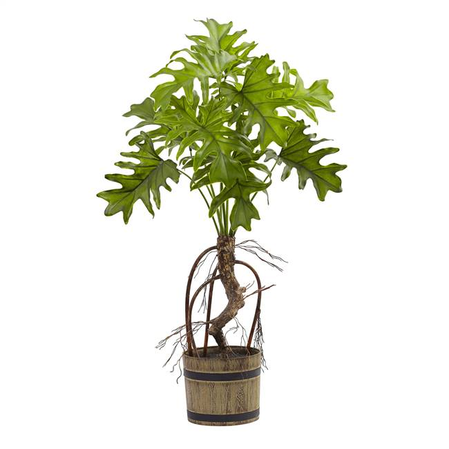 Split Philo Plant w/Bucket Planter