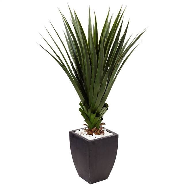 4.5' Spiked Agave in Black Planter (Indoor/Outdoor)